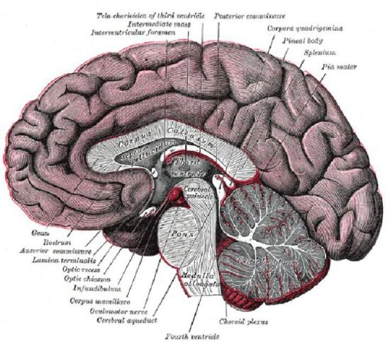 Welcome further along counseling denver therapist colorado brain diagram ccuart Choice Image